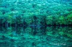 新緑の蔦沼1