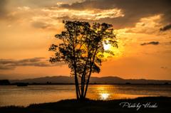 シルエットツリー