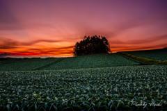 緑の大地と赤い空