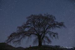 満天の夜桜