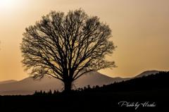 シルエットツリー2