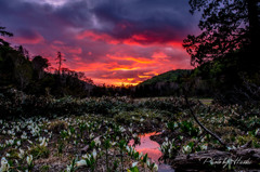 夕焼けの尾瀬湿原