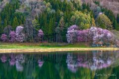 中綱湖朝景
