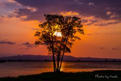 思い出の樹