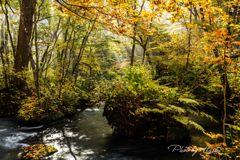 奥入瀬の秋