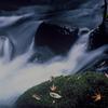 大岩川の秋d