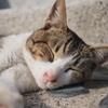 博多の野良猫