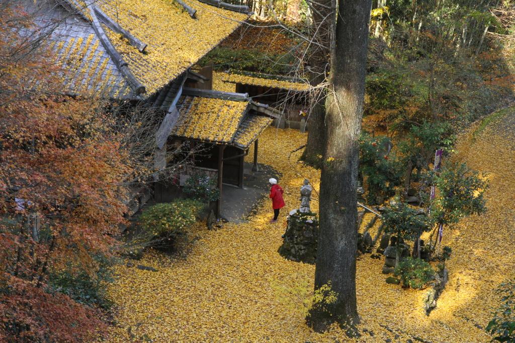 康平寺の秋