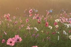 花の通学路
