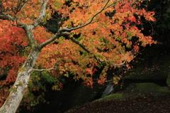 IMG_6524渓谷 の秋