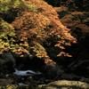 矢谷渓谷の紅葉
