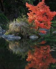 小野泉水の小さな紅葉
