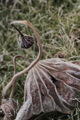 冬の華(2)