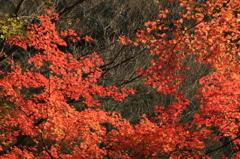 IMG_6024真っ赤な秋
