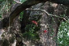 母なる大樹