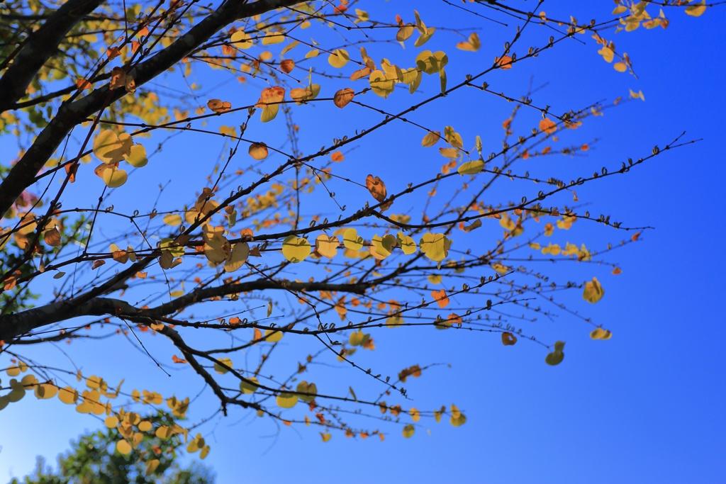 残暑の秋色
