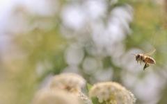 蜜蜂ハッチ ♪