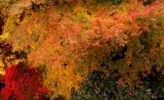 秋彩パレット