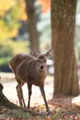 笑みを浮かべる鹿
