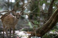 こんにちは、鹿さん