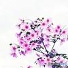 Tree Dahlia 2