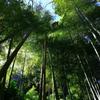 竹林の調べ