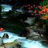 渓谷の秋彩
