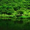 緑陰の静けさ