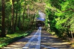 鎌倉の隠れ寺「寿福寺」参道