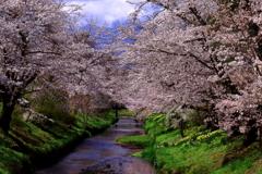忍野村の春