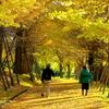 惜秋(せきしゅう)の散歩道