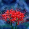 想い出の花