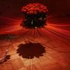 異空間に咲くバラとアリ