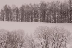 2012.12 美瑛の穏やかな冬景色 その2
