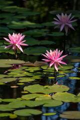 三木山森林公園 蓮池 その5
