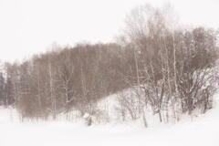 2012.12 美瑛の穏やかな冬景色 その1