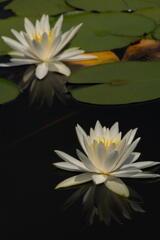 三木山森林公園 蓮池 その2