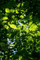 兵庫県立フラワーセンター 緑の輝き
