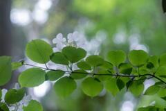 神戸市立森林植物園 祝入梅 その1