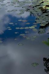 森林植物園の長谷池