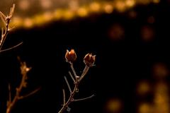 冬の森物語 3