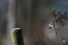 冬の森物語 7