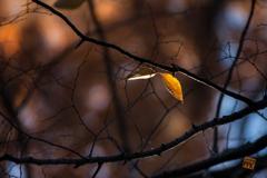 冬の森物語