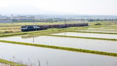 田んぼを抜ける貨物列車