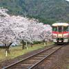 桜並木を行く2