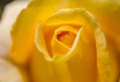 20190512-yellow