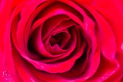 20190512-情熱の赤
