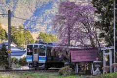 ローカル線と枝垂れ桜
