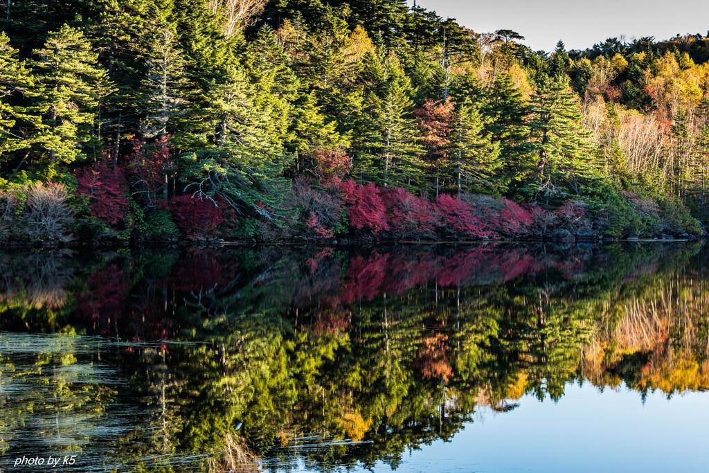 白駒池の紅葉3