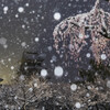 雪の朝の共演